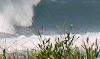 Seis praias são liberadas para a prática do surf durante a safra da tainha