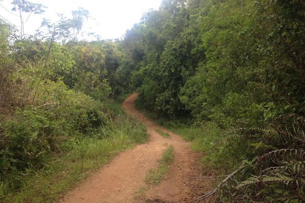 Trilha que liga o Pântano do Sul à Lagoinha do Leste.