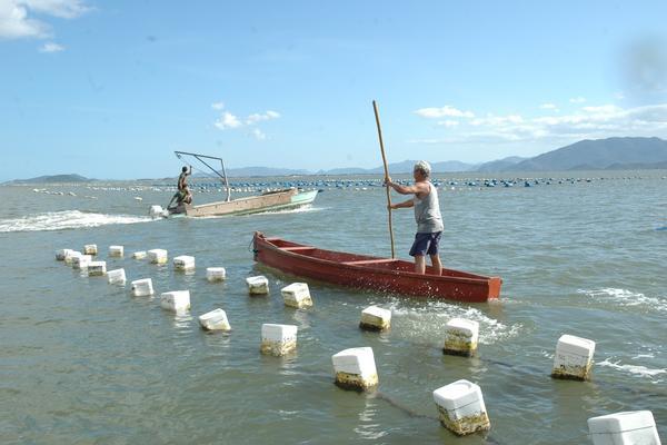 Maricultura em Florianópolis (Foto: Nilson Teixeira/Epagri)