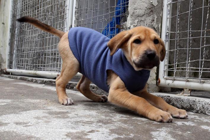 Bem-Estar Animal: atendimentos e castrações aumentam em seis meses