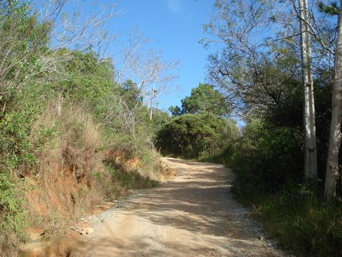 Corpo em estado de putrefação é encontrado no meio do mato no Morro do Sertão