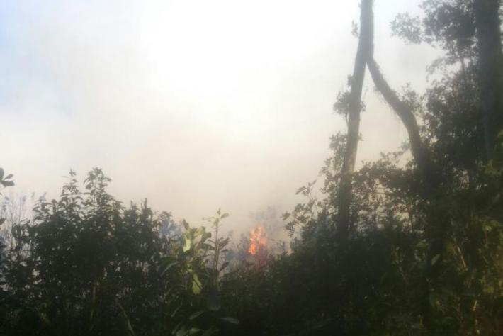 Incêndio em mata nativa do Sul da Ilha