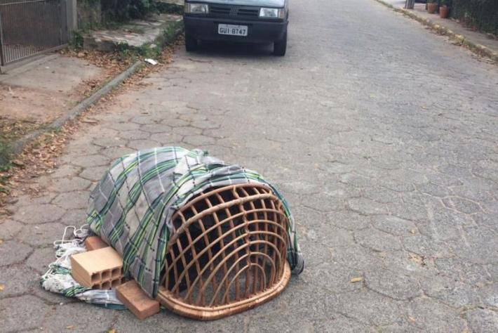 Moradores do Rio Tavares socorrem Coruja ferida